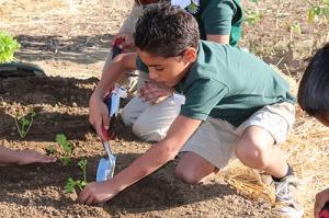Grimmway Academy Edible Schoolyard