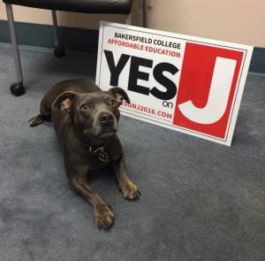 布鲁斯- -选举-狗- 11月- 9 - 2016