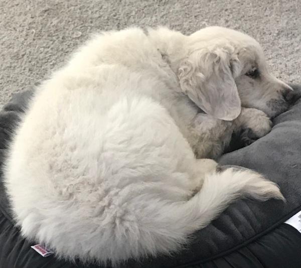 Neo于2017年5月20日就寝