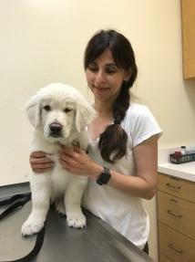 2017年6月2日NEO与Sonya在兽医