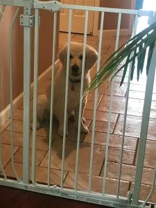 July 9 2017 Neo behind gates