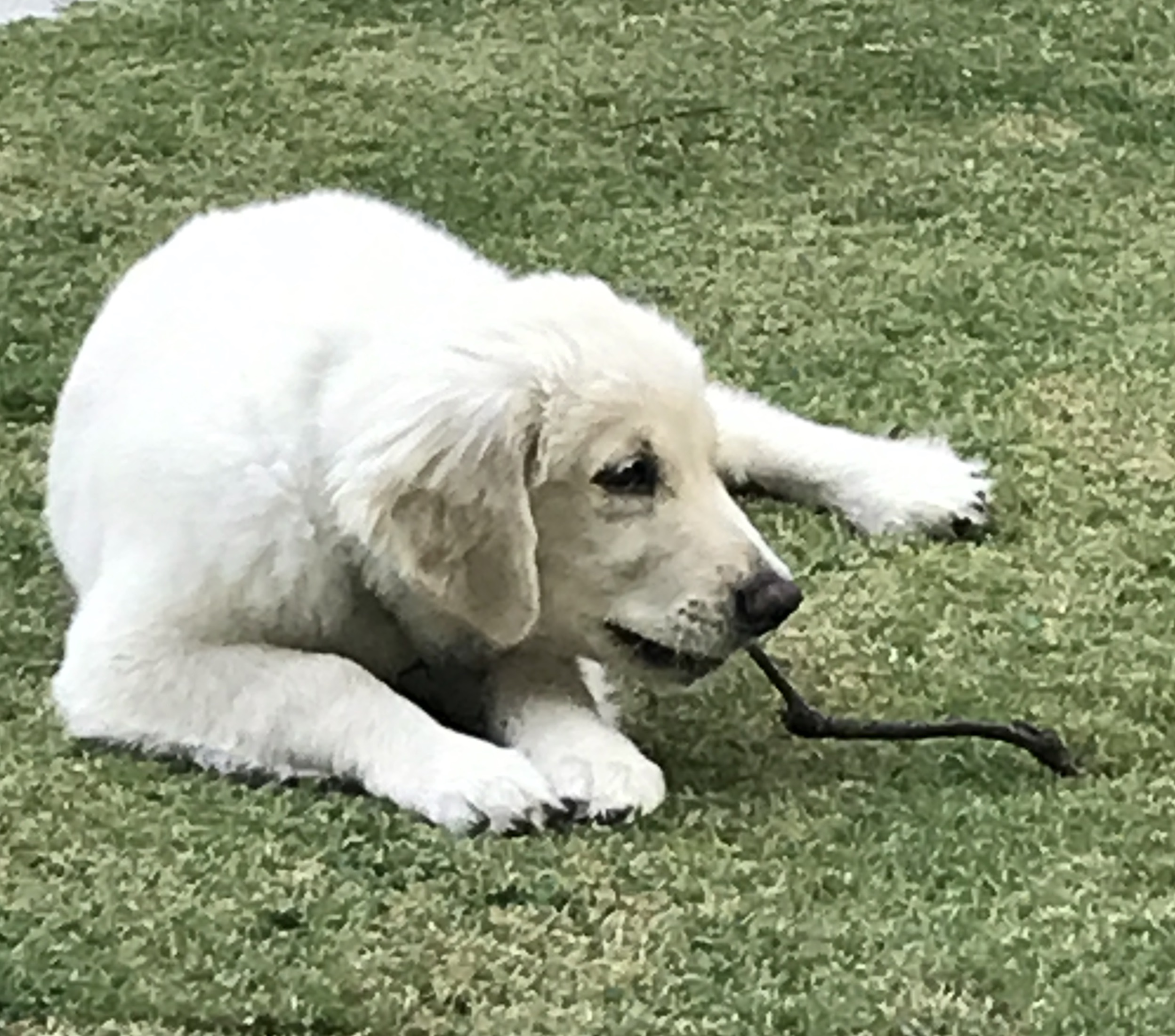 June 30 2017 Neo with a stick