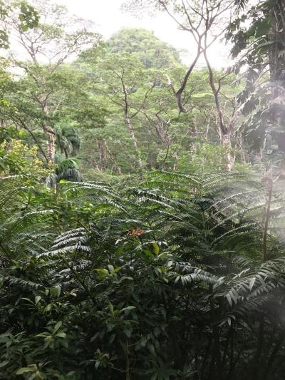 马诺阿瀑布1