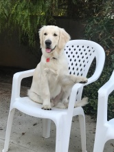 August 16 2017 Neo on the chair in the backyard