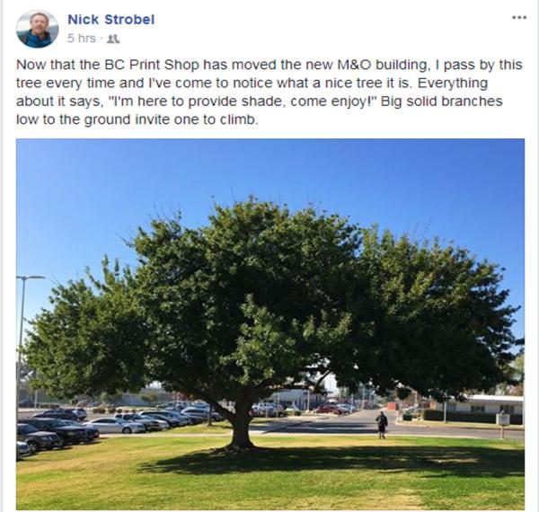 Nick Strobel Facebook 2017年11月关188bet asia app于树的报道
