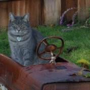 Tabby in a rusty truck garden decoration