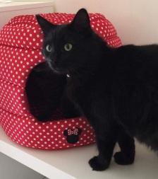 有红色床的黑猫