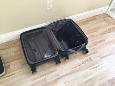 手提箱里的黑猫