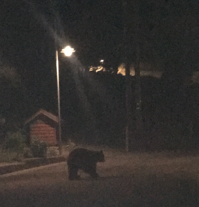 Corny Rodriguez encounter with a bear in Mammoth Lakes