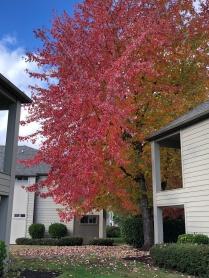 秋天的颜色尤金2018年10月28日