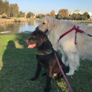 2018年10月21日,贝茜和尼奥在河边散步公园