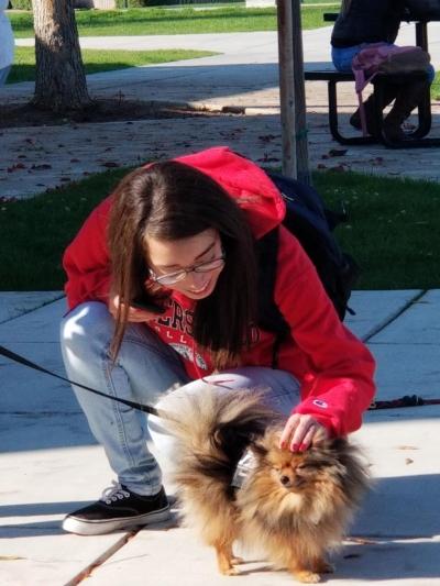 学生抚摸狗