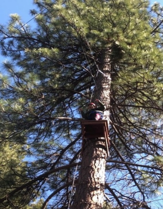 Student prepares to zip line from a tree.